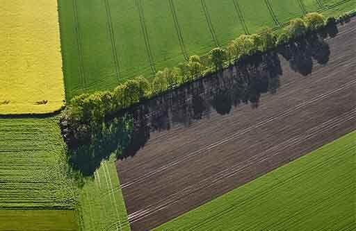 Gult och grönt fält ovanifrån
